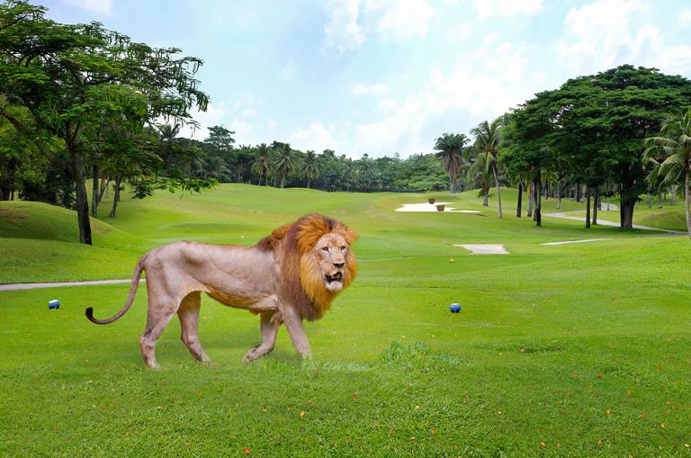 Campos-Golf-Peligrosos